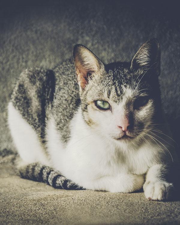 cat-look